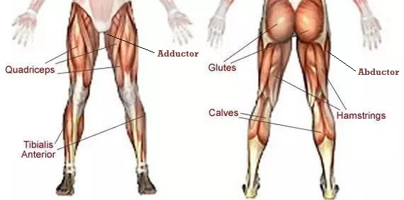 does running build leg muscle